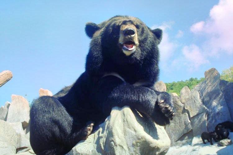 동방 곰 목장