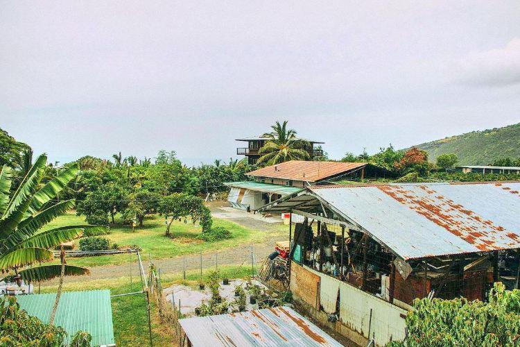科納咖啡農場