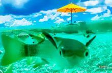 与鲨鱼共享午餐体验