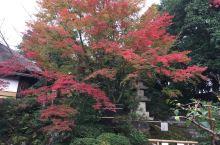 京都红叶行4