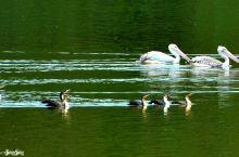 卡伦湖畔水鸟家园