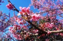 冬日里的花