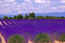 ①瓦朗索勒(Valensole)广阔的田野平原是与索村(Sault)齐名的薰衣草种植地大本营,是薰衣