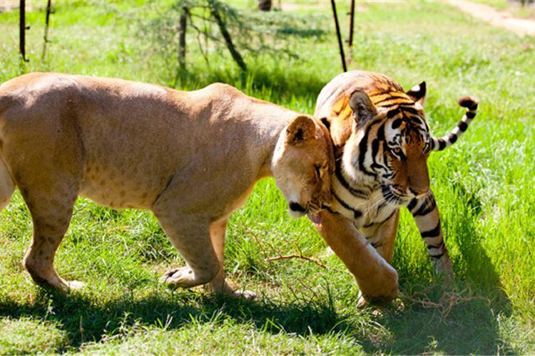 Zhengzhou Zoo3