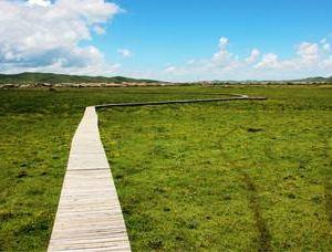日干乔大沼泽旅游景点攻略图