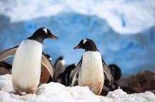 南极探秘 | 高端游的新境界,另一个世界里的奇幻漂流