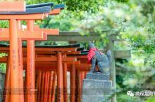 东京这6个隐秘的地方,国内旅行社绝对不会带你去!