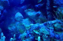 对我们奇妙的朋友say hi~——畅游珠海梦幻海洋王国