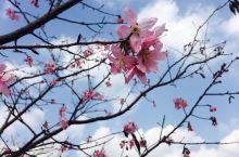 Lala的旅行之新丰樱花峪