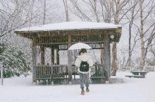 冬未了!北国的腔调,是秘汤温泉下的蔚蓝雪白(支笏湖、札幌、小樽、朝里、旭川、函