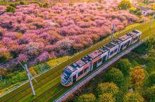 江浙沪又多一网红打卡地!一辆有轨电车穿过海棠花海,只要2元就能直达太湖
