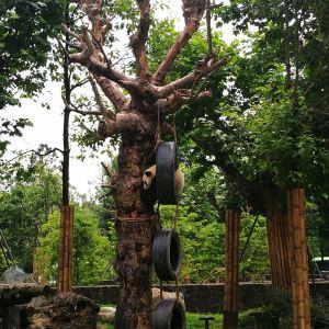 都江堰熊猫乐园景区旅游景点攻略图