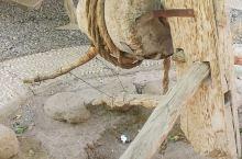 吐鲁番坎儿井1