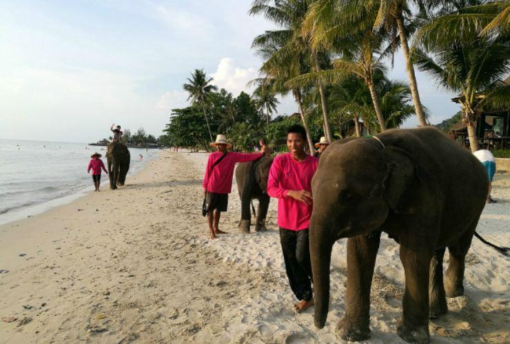 Kaibae Meechai Elephant Camp3
