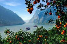 三峡:正是橙黄桔熟时