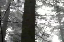 原始森林参天树