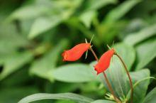 中国科学院华南植物园之----冬暖花开,姹紫嫣红。