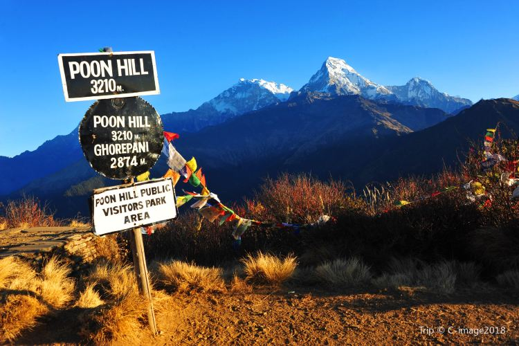 Poon Hill1