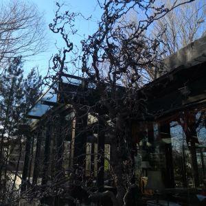 果园西餐厅旅游景点攻略图