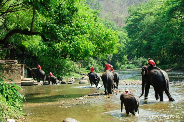 Maesa Elephant Camp2