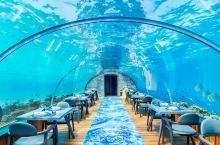 马尔代夫6大浪漫海底餐厅   蓝海中的那一份珍馐美馔定会让你此生难忘