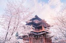 看樱花何必去日本,国内十大赏樱胜地了解一下