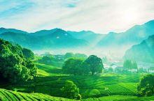"""今春踏青就去武夷山,采茶倒计时,这里有一份""""茶旅攻略""""要送给你。"""