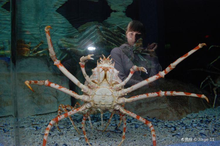 Two Oceans Aquarium4