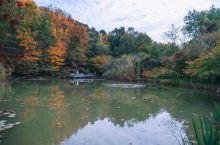 枫叶红了,这个地方又霸占了江南最美的秋天,你去过吗?