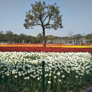 大宁郁金香公园旅游景点攻略图