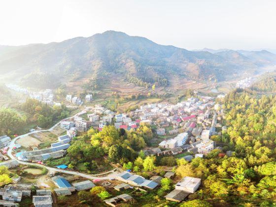 Pingtian Ginkgo Township