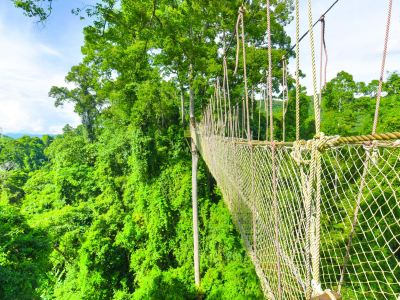 Xishuangbanna Tropical Rainforest National Park Wangtianshu Scenic Area