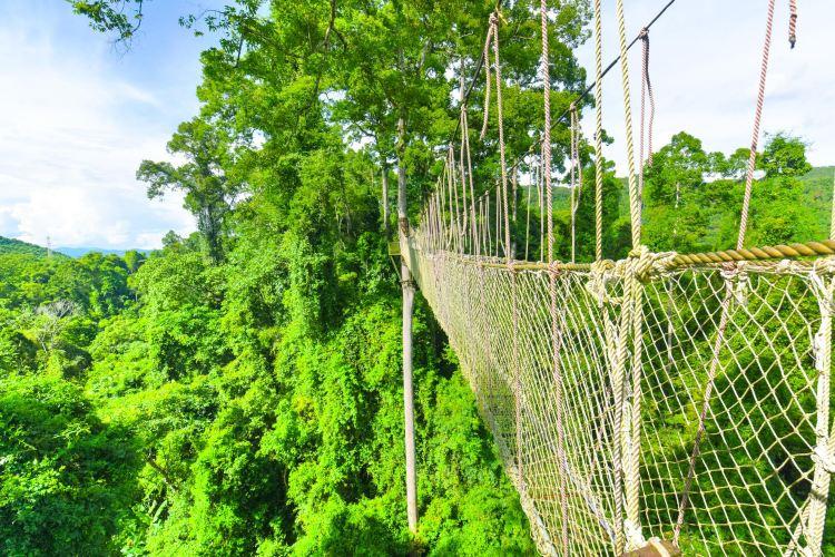 Xishuangbanna Tropical Rainforest National Park Wangtianshu Scenic Area