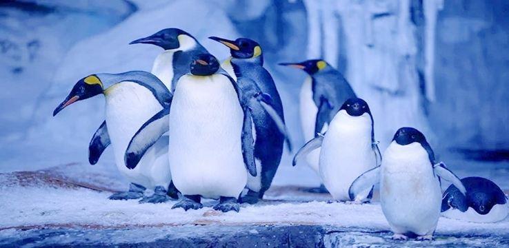 Wuhan Haichang Polar Ocean World