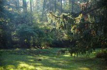 白居易草堂:中国古典园林史上的杰作