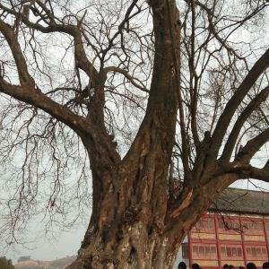 五祖寺旅游景点攻略图