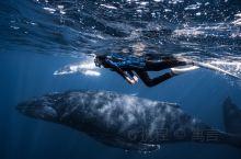 我在汤加和大翅鲸母子同游