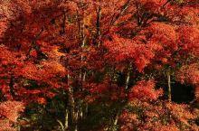 香岚溪是日本东海地区代表性的红叶胜地,位于奥三河足助町的国家公园。每年11月中下旬左右,以饭盛山为中
