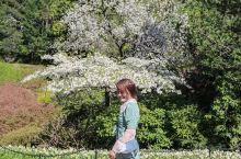 上一次来布查特花园是半年前的秋季,满园的海棠花和大丽花争奇斗艳。最美花园毫不为过。  「关于布查特花