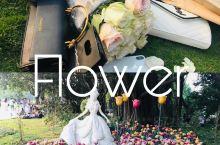 深圳·荷兰花卉小镇 街道两边全部都是卖花的,而且还很便宜,我这么一大束才25元。景区里面还有一个花卉
