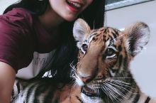 Tiger World 抱抱泰国小老虎 我坐着车租车从丹嫩沙多水上市场到的这里,地方很好,游客不多,