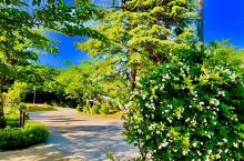 旭川的八大景观之ときわ公园 不约而同的第一站 说也奇怪,来北海道这么多次,每每都会绕开旭川,这一回不