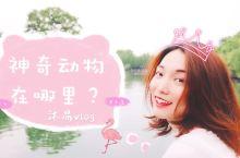 魔都周末游【打卡野生动物园,放飞童心】 上海的周末,不单单是逛街看展,迪士尼打卡,下午茶电影,公园野