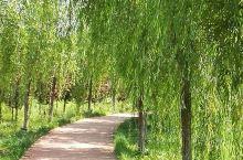 岐山风鸣湖公园:夏日的凤鸣湖,碧波荡漾,绿树成荫,是休闲消署漫步健身的好去处。茶余饭后,从县城南关出