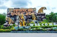 与动物们共舞的奇妙天地      泰国是一个神奇的国度,在这里会看见很多令人惊奇的事。早就听说是拉差