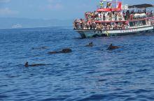 在花莲最兴奋就是在太平洋上看到野生的海豚群和鲸鱼群!船上的孩子一片片叫喊声