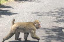 屋久岛白谷云水峡的猴子