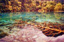 【散落瑶池,有种童话色彩叫九寨】 九寨之水如今早已不是什么神秘之处,可每当你走入其中总如置身于梦幻的