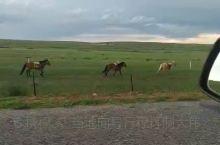希拉穆仁草原跟马拍
