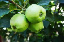 路边遇到苹果届的吊(píng)死(guǒ)干~(◔◡◔)